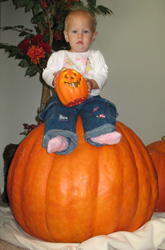 [Photo: Stella sitting on a pumkin]