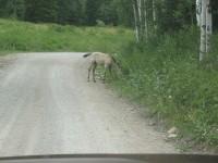 [Photo: Manti-La Sal; Skyline Drive, Colt in the road]