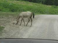 [Photo: Manti-La Sal; Skyline Drive; Colt in the road]